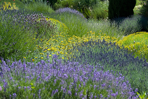 Am nager un jardin m diterran en les r gles monjardin - Creer un jardin mediterraneen avignon ...